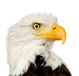 Tree Eagles Fence & Landscaping